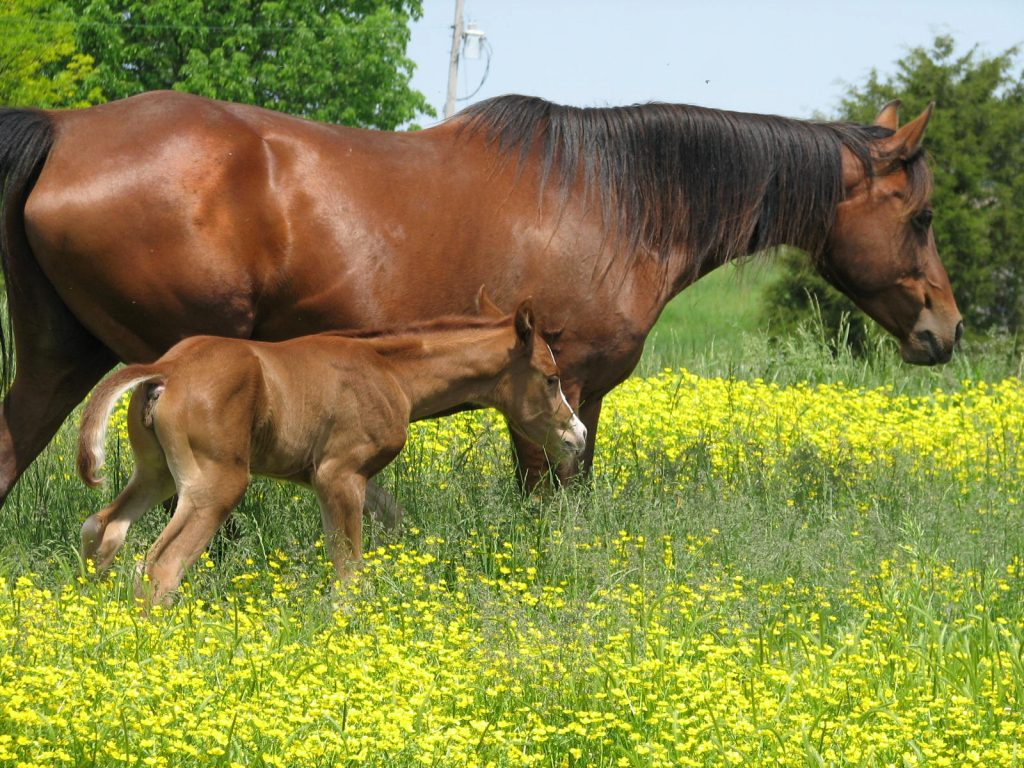 WineGlass Fleurie & Max Filly