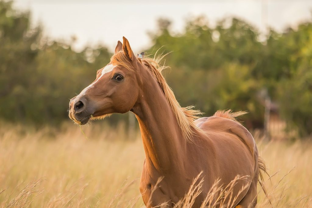 6 Ways to Promote a Horse's Gut Health